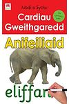 Activity Flashcards: Animals (In Welsh)