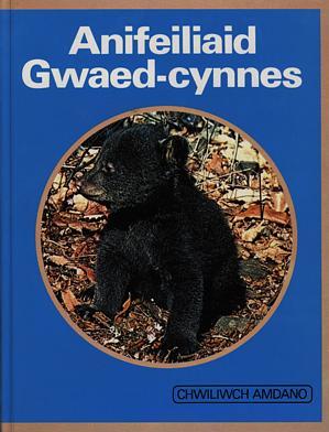 Cyfres Chwiliwch Amdano: Anifeiliaid Gwaed Cynnes