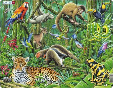 Bywyd Gwyllt y Goedwig Law / Wildlife of the Rainforest